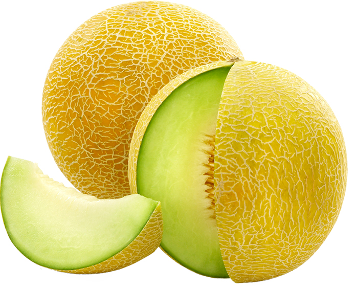 Galia-Melon-germany-import-company