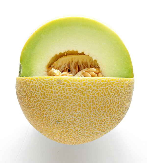 galia-melon-import-export
